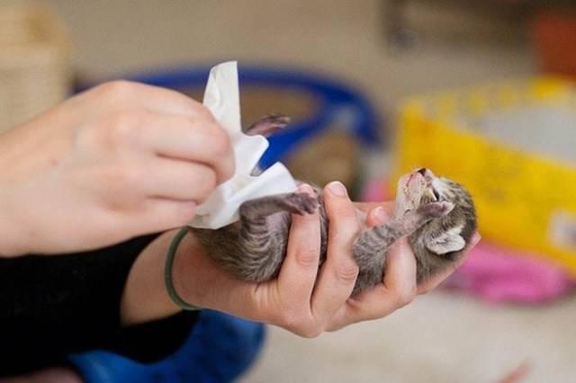 Когда котенок должен начать самостоятельно ходить в туалет по-большому