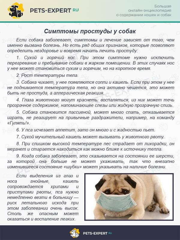 Простуда у кошек симптомы и лечение заболевания