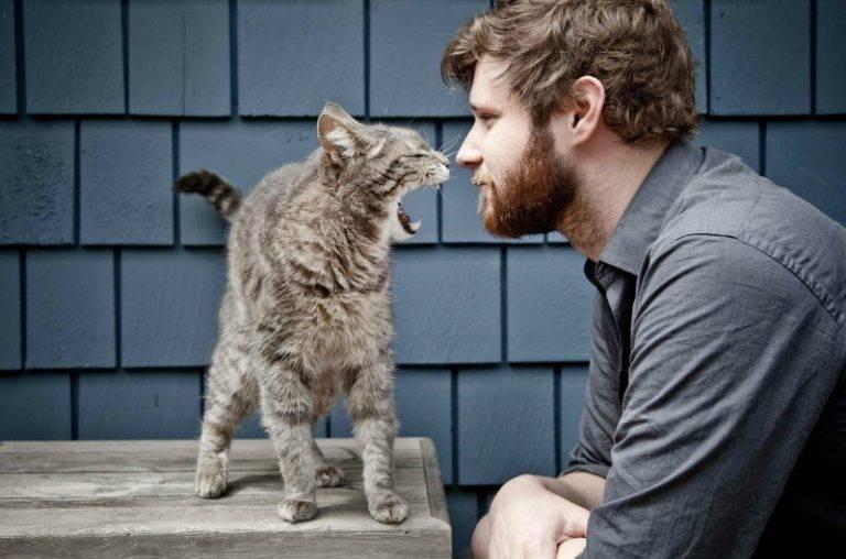 Агрессия кошки: психология поведения животных. оборонительная и наступательная агрессия питомца - как быть? (фото + видео)