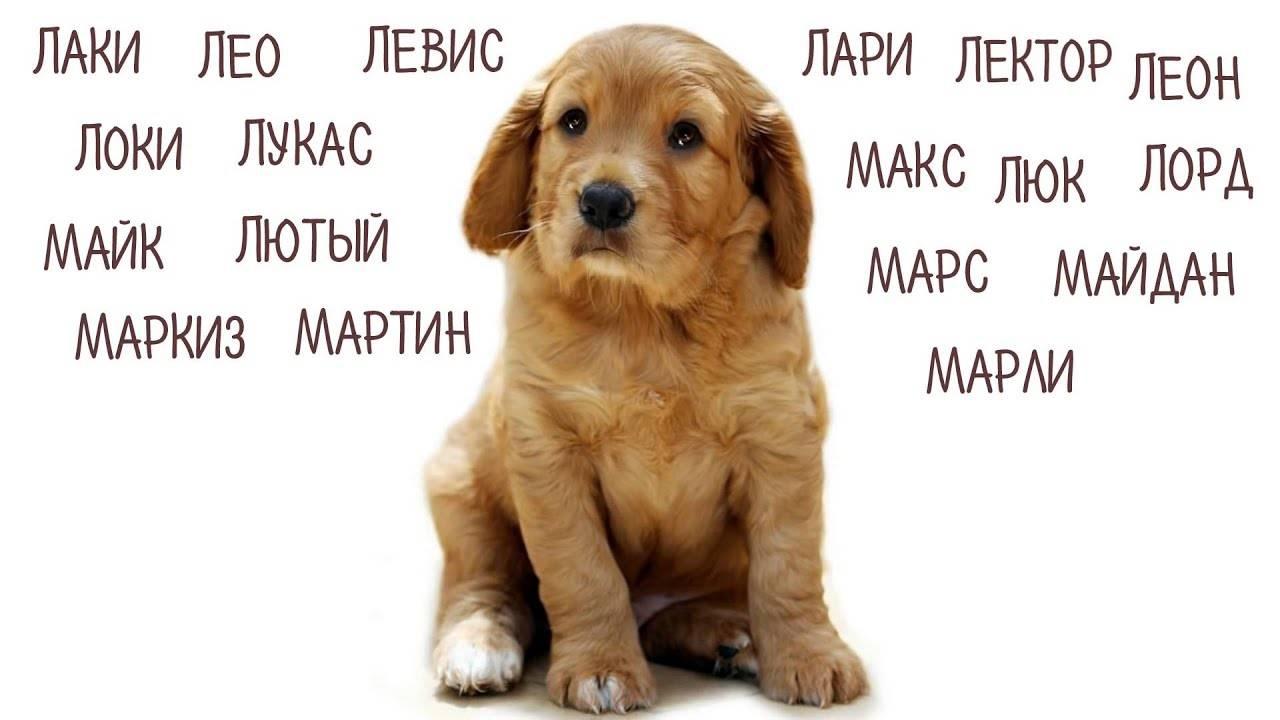 Как назвать собаку девочку? имена для собак девочек