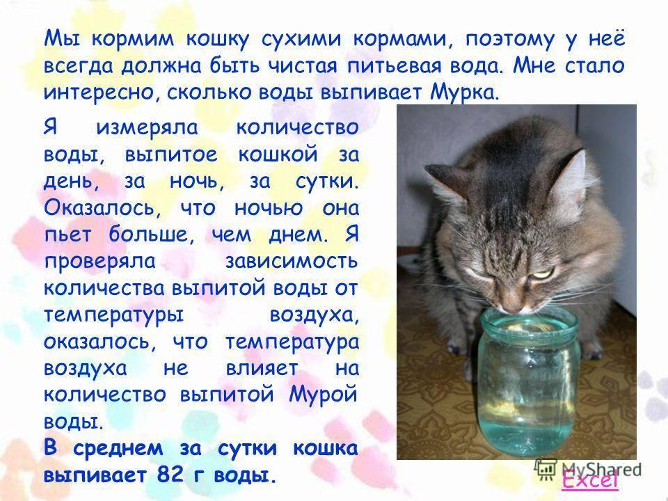 ✅ как приучить котёнка пить воду - study-bro.ru
