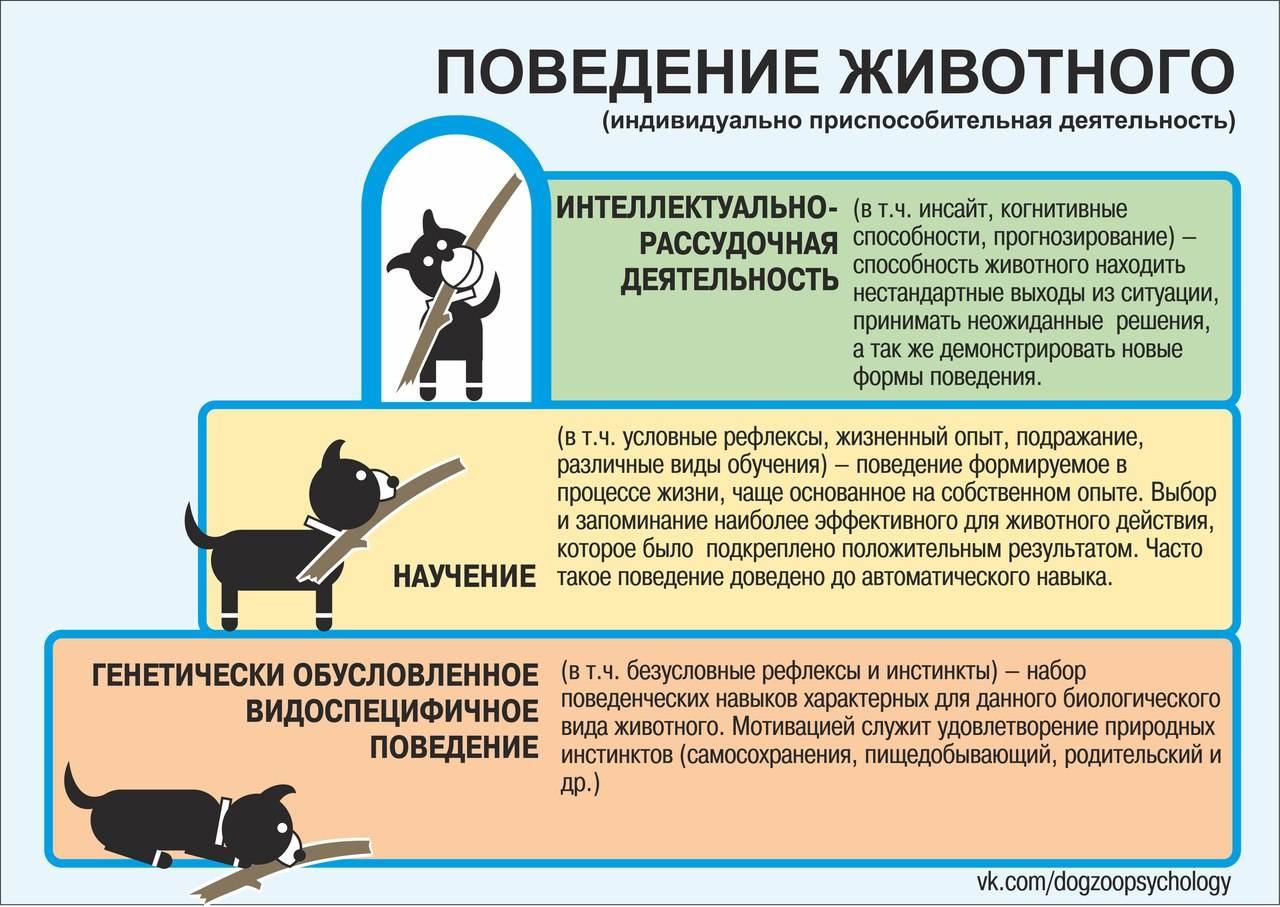 Как видит мир собака - и что означают собачьи поцелуи. как понимать поведение собаки