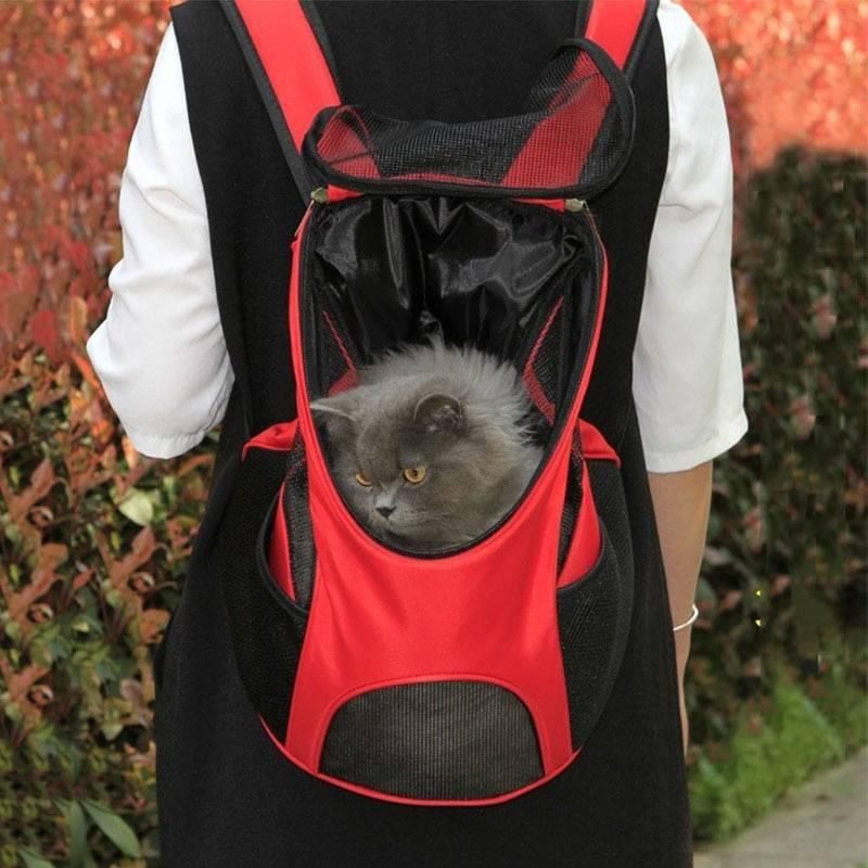 Чем отличается кенгуру от эрго рюкзака