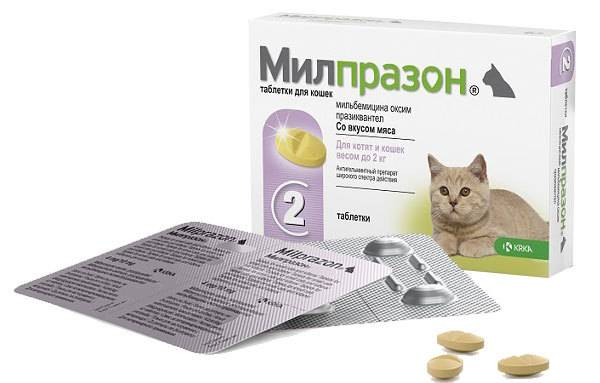 Милпразон для кошек: инструкция и показания к применению, отзывы, цена