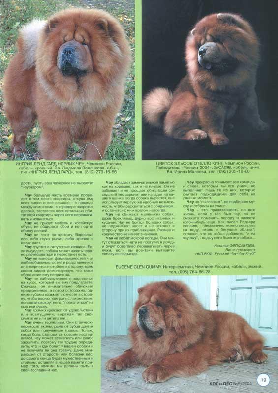 Собака чау-чау: описание породы и характеристика, содержание и уход, характер собак и дрессировка