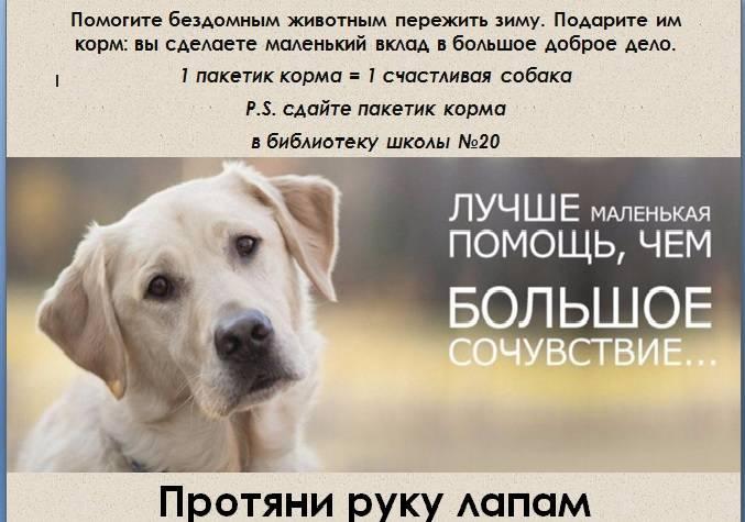 Если вы подобрали собаку с улицы… что сделать, проверить, обустроить в первую очередь? | мур тв