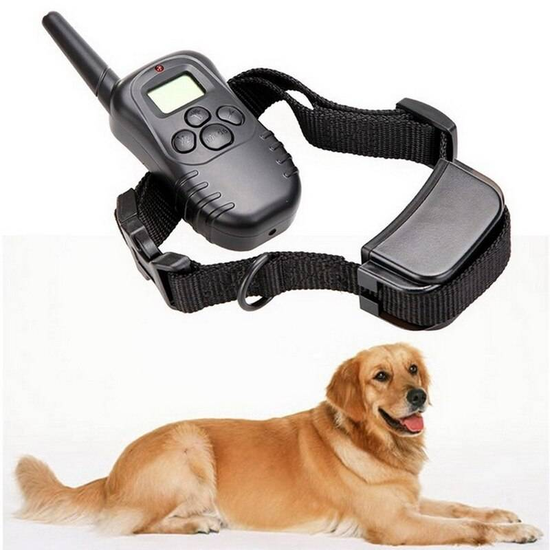 Обзор электрических ошейников для собаки: применение в дрессировке