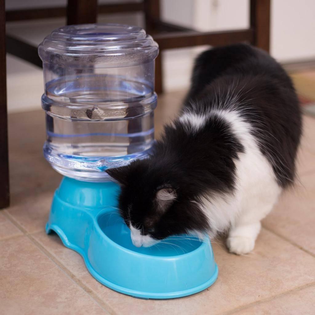Почему кот пьет мало воды: выясняем причины