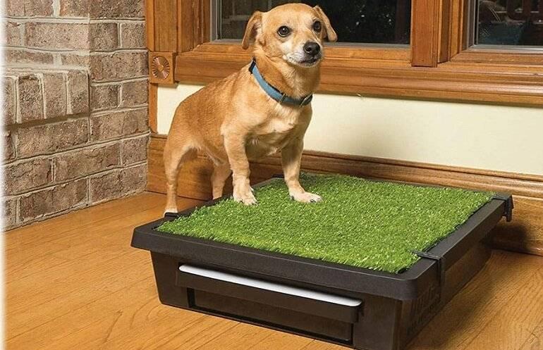 Подробная инструкция как отучить собаку писать и гадить дома