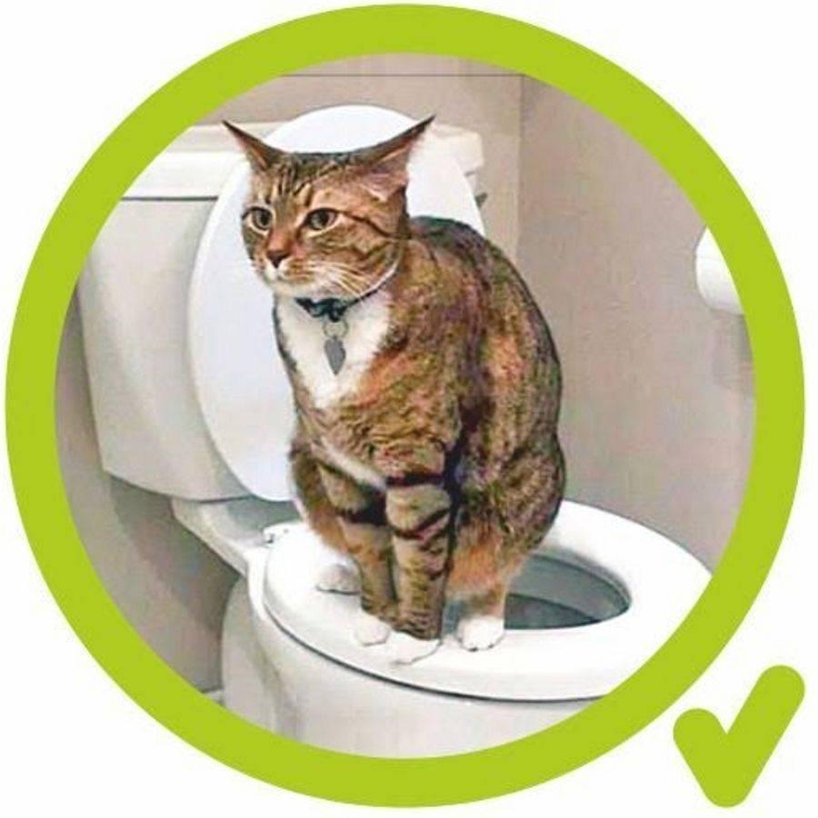 Как приучить кошку к унитазу: полезные советы