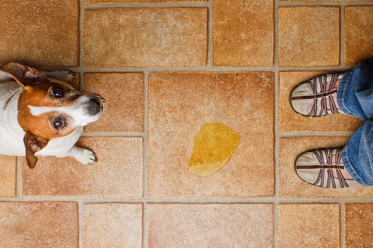 Почему собака тычет носом человека? вы удивитесь