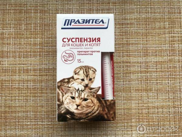 Празител (суспензия и таблетки) для кошек и котят: инструкция по применению, показания и противопоказания, аналоги, отзывы