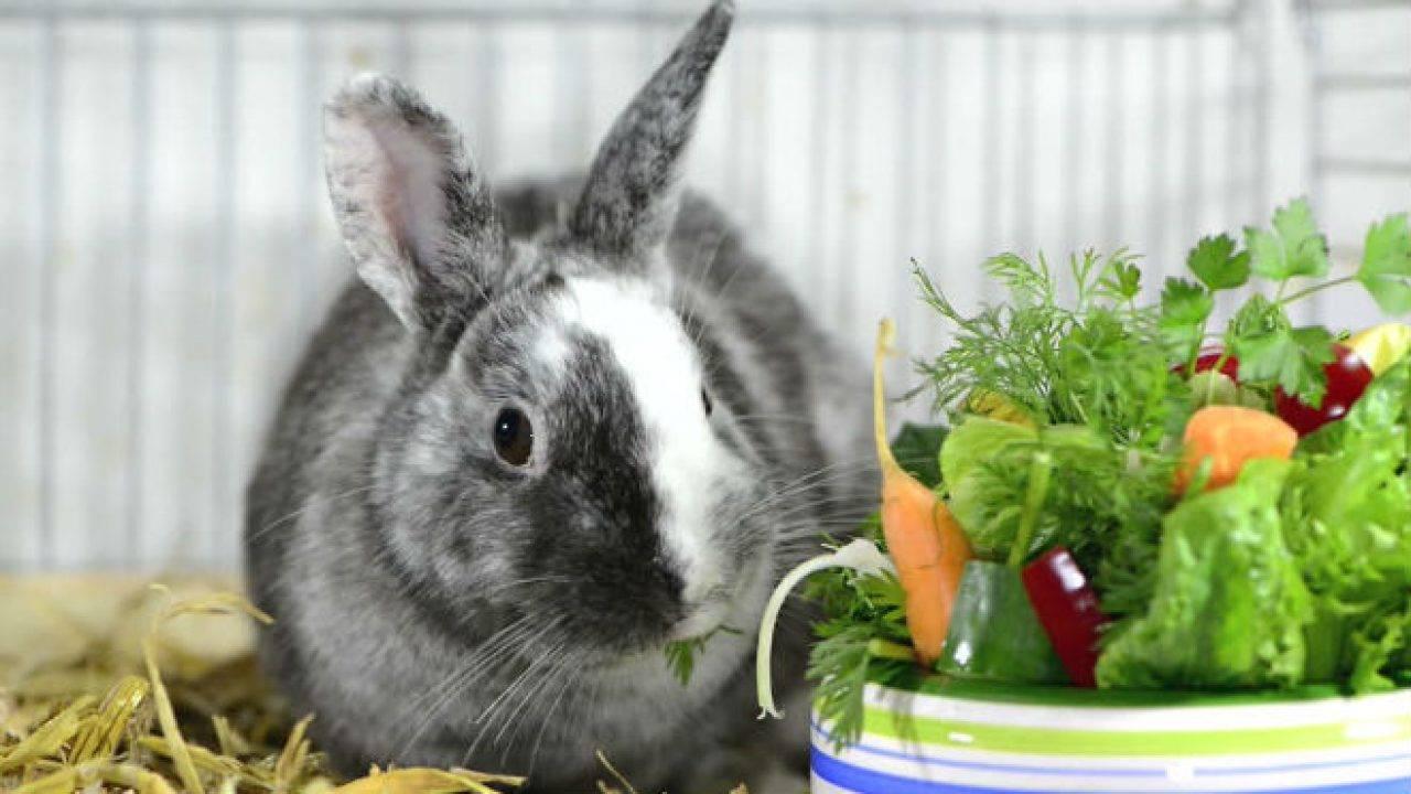 Можно ли давать кроликам хлеб или сухари !