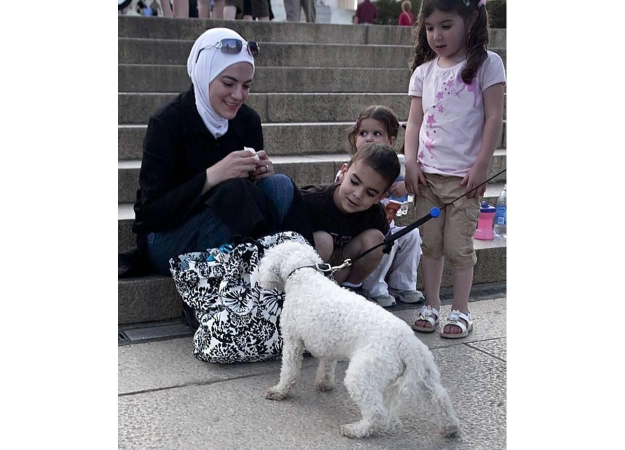 Почему мусульманам нельзя трогать собак