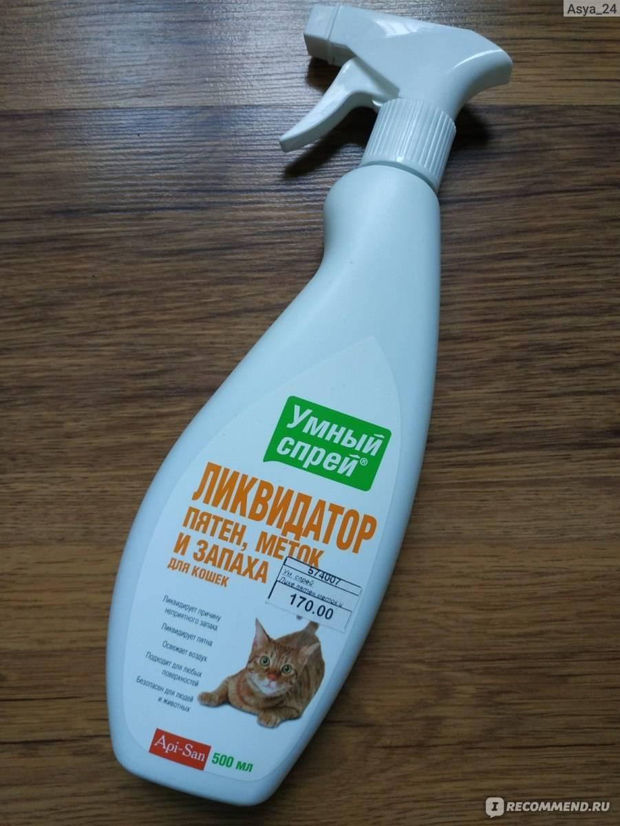 Как избавиться от запаха кошачьей мочи: ⛔ народные и специальные средства