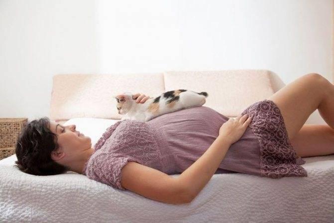 Можно ли беременным быть рядом с кошками. почему беременным нельзя гладить кошек и контактировать
