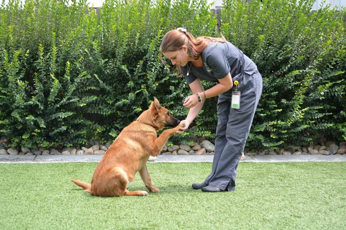 Как отучить собаку прыгать на людей (+видео)