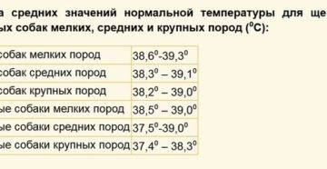 Какая нормальная температура тела у собаки и как её измерить ⋆ собакапедия