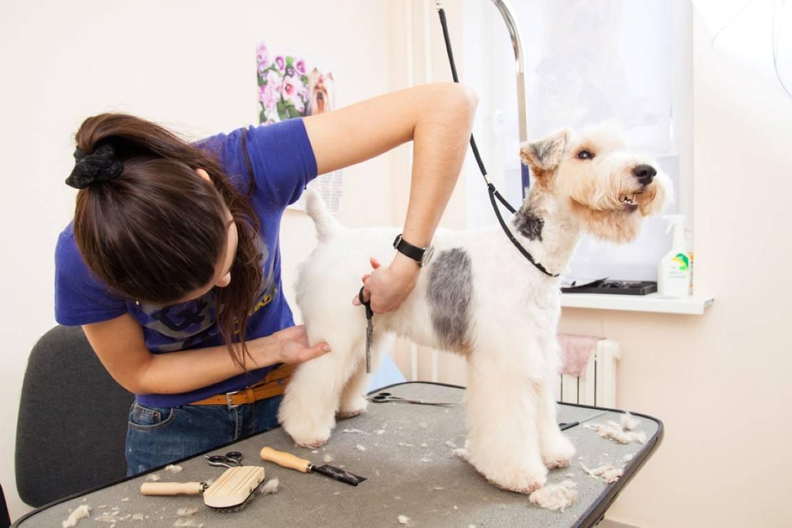 Как подстричь когти собаке в домашних условиях, видео