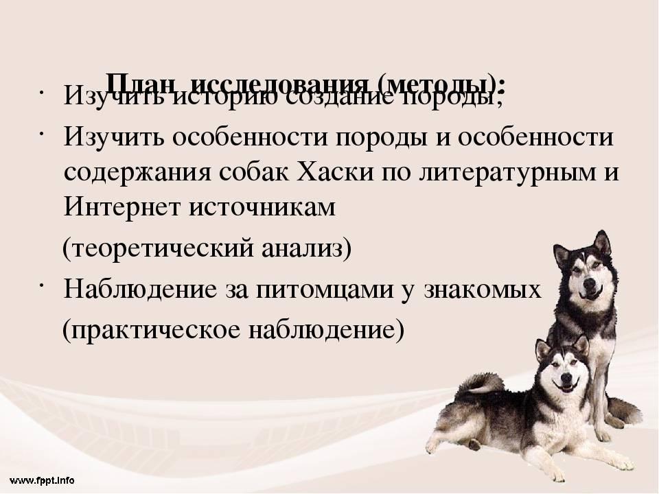Хаски - уход и содержание в частном доме   собачий блог