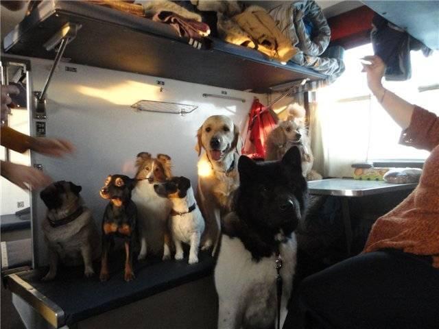 Правила перевозки животных в поезде :: businessman.ru
