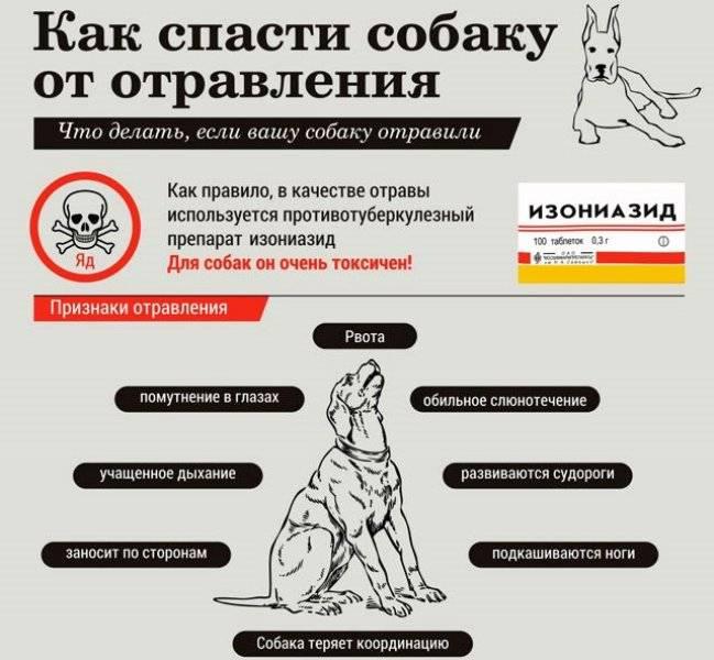 Пищевое отравление у собак: симптомы и методы лечения в домашних условиях