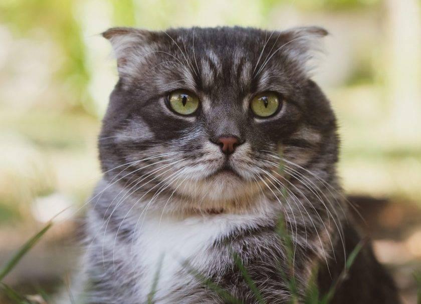 Топ-10 вещей, которые терпеть не может ваша кошка