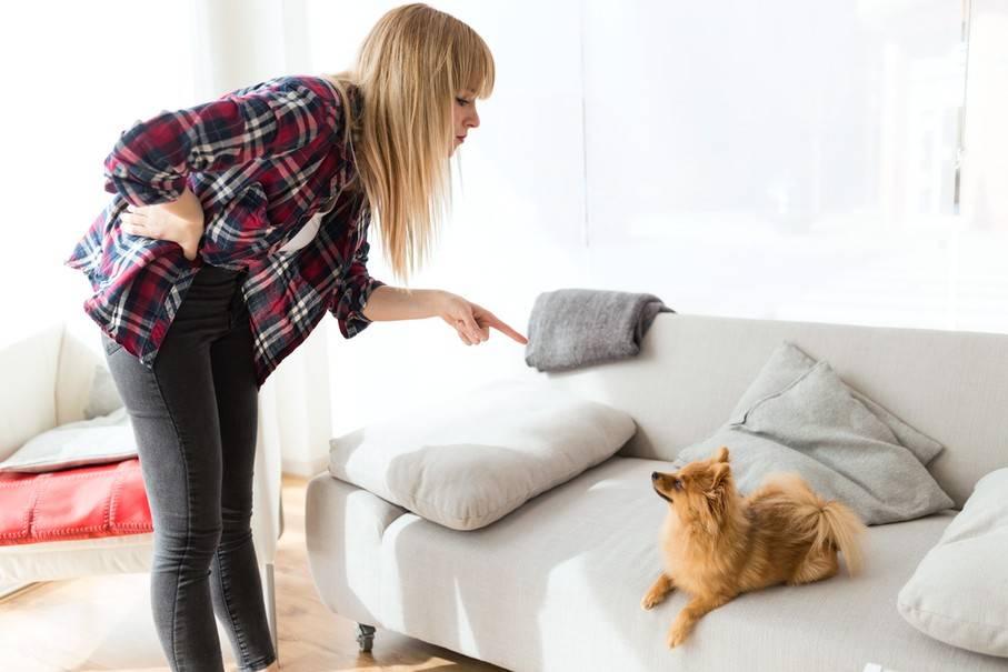 Что делать с непослушной собакой: непослушные породы собак, ошибки начинающих владельцев, методы воспитания и корректировки поведения