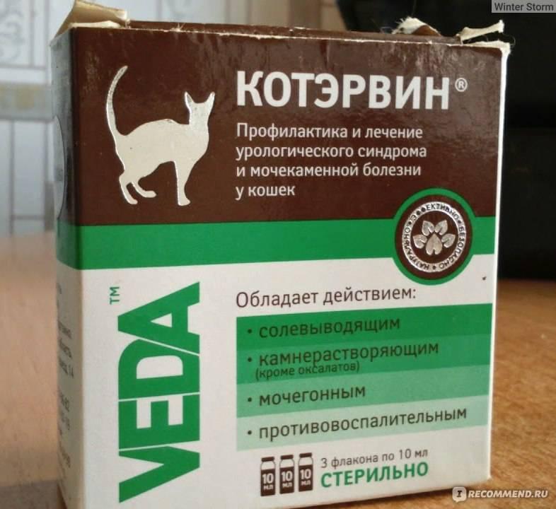 Котэрвин: инструкция по применению для кошек, отзывы ветеринаров и владельцев кошек