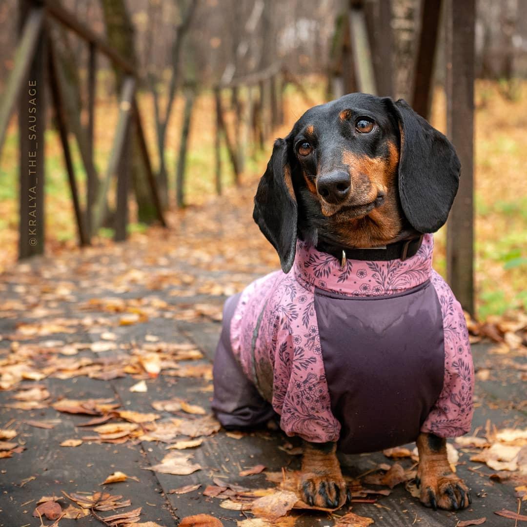 Сколько лет живут таксы в домашних условиях: как определить возраст собаки и каким образом можно продлить ее жизнь. как определить возраст у собаки породы такса? как определить что щенок такса - заболевания-мед