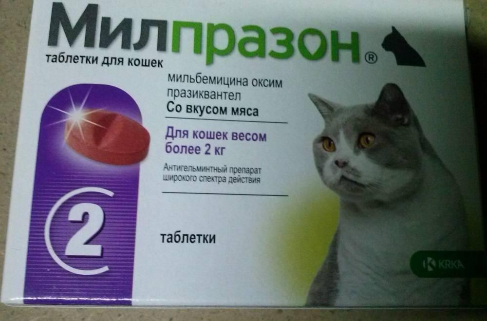 Травы для кошек при запоре