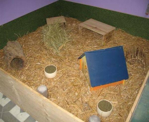 Домик для морской свинки своими руками фото и видео