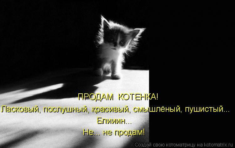 С чего начать - воспитание котенка. непослушный котенок: как воспитать