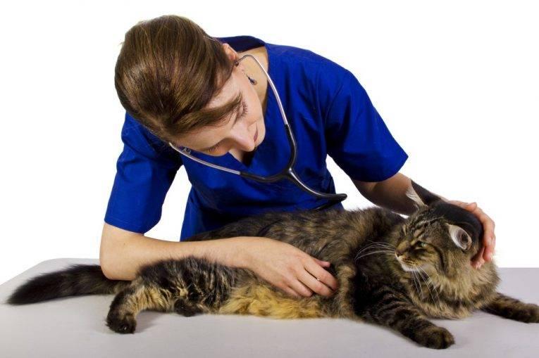 Как лечить диарею у кота самостоятельно?