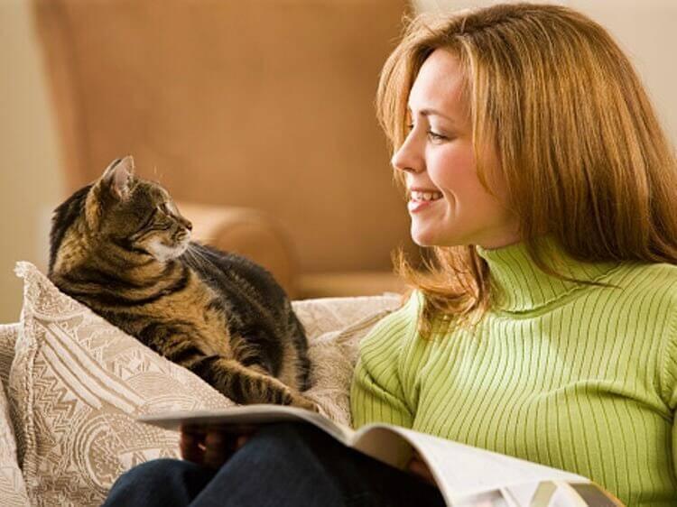 3 вещи, от которых в восторге и кошки, и их хозяева