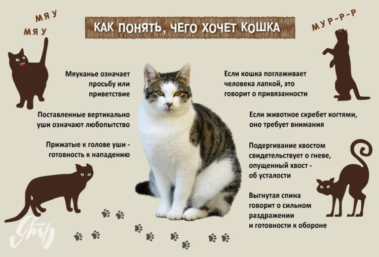 Почему кошка шипит и рычит на своего котенка