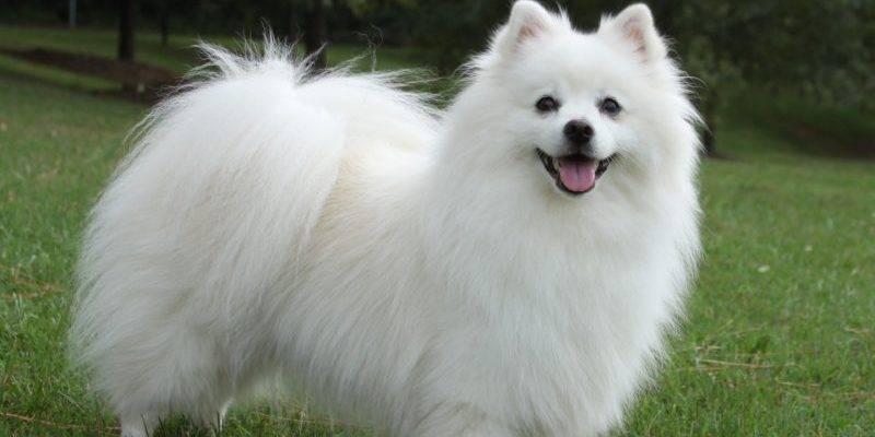 Окрасы собак: особенности и виды