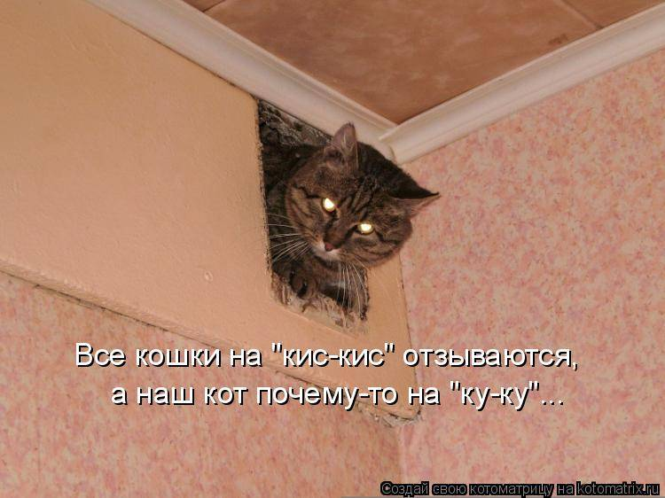 Кошка все время просит есть.
