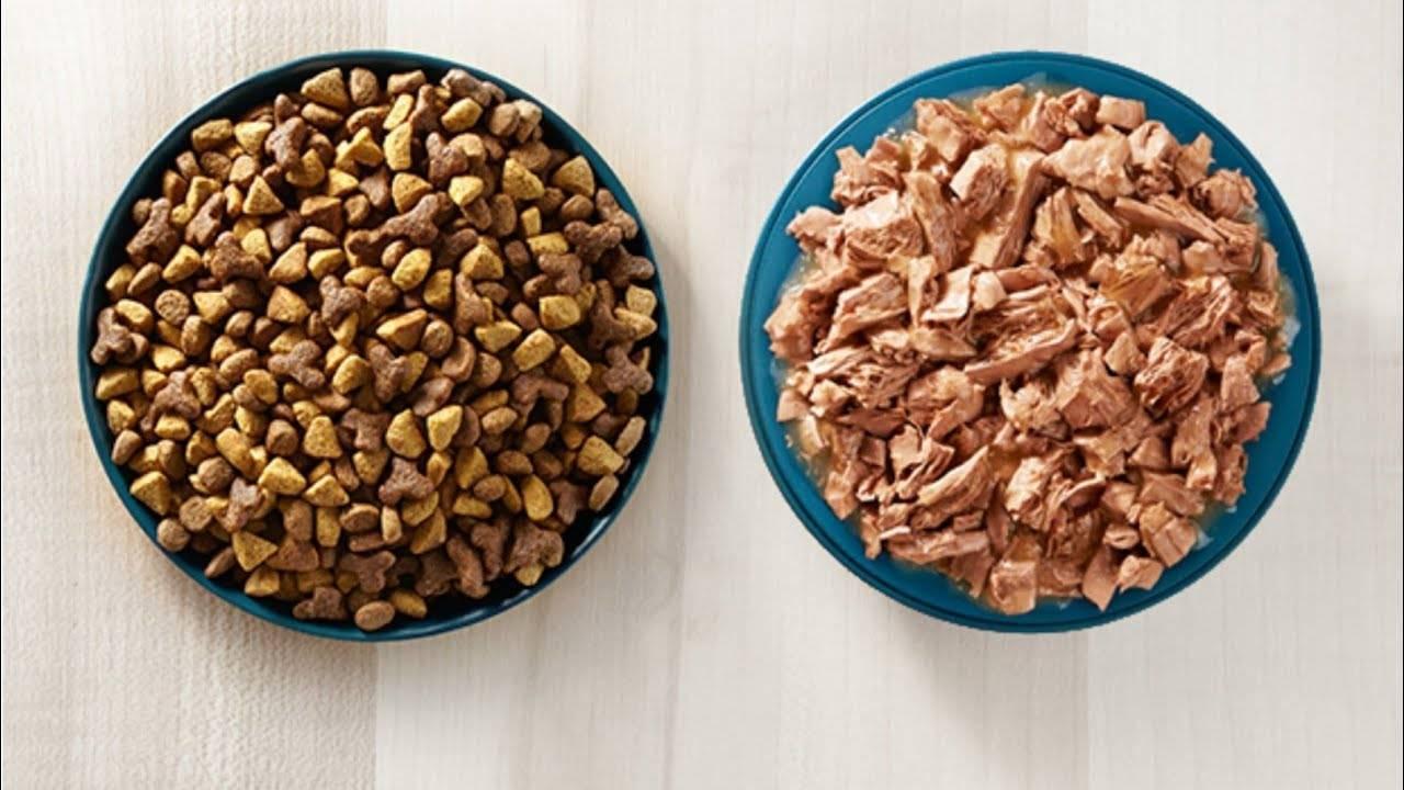 Как правильно кормить собаку сухим кормом: когда и как давать сухой корм