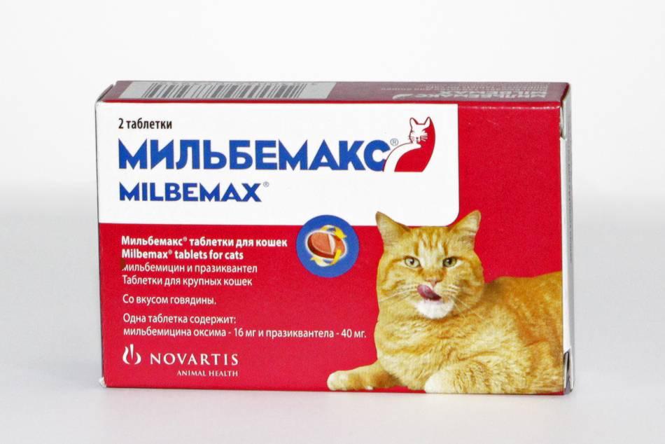 Мильбемакс для кошек и собак от глистов. инструкция к применению