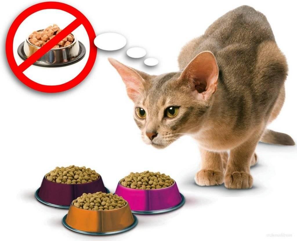 Субпродукты для кошек: какие лучше давать, в каком количестве и как часто, сырые или вареные, для чего вводить в рацион
