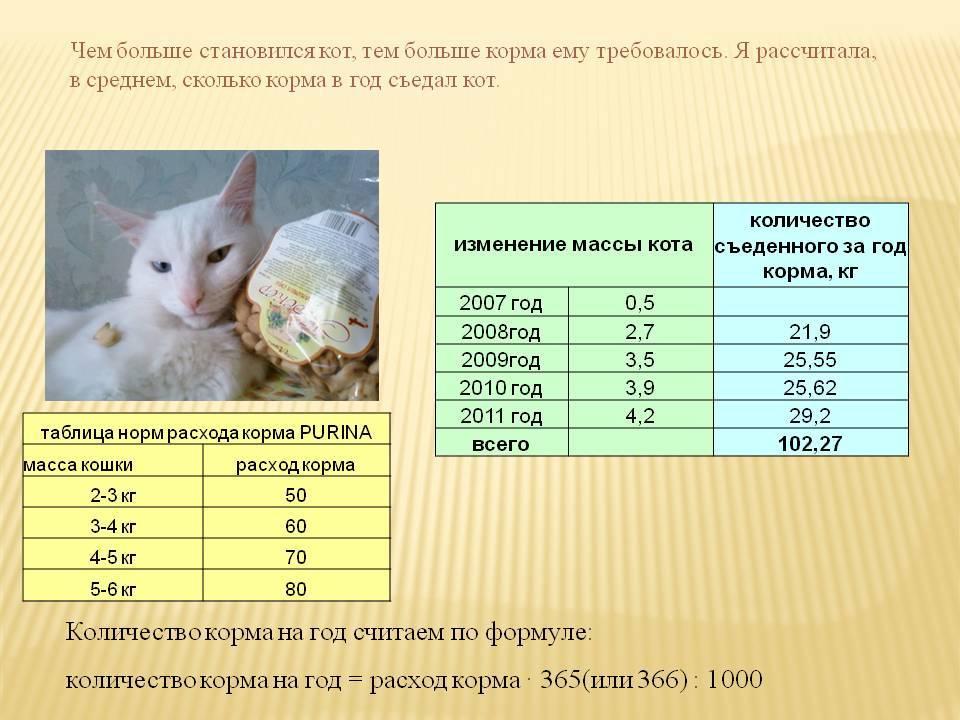 Как правильно и чем кормить котенка по месяцам, сколько раз в день?