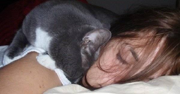 Сколько спят кошки в сутки? 140 фото и видео советы по уходу и описание здорового образа жизни кошки