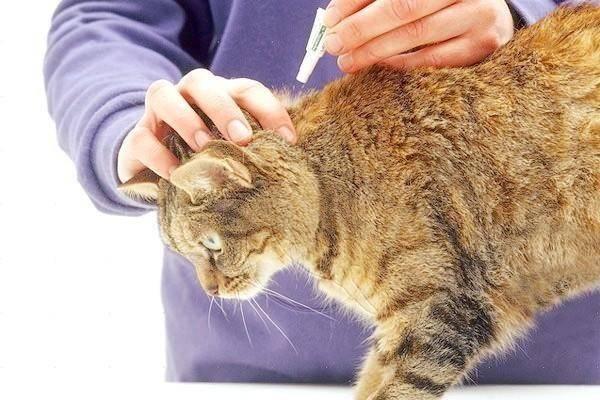 Описание холки у кошек: где это место и зачем это необходимо знать