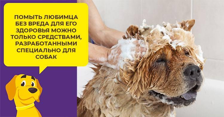 Чем заменить шампунь для собак - dogkind.ru