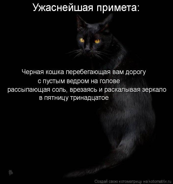 Черный кот в доме - приметы и народные суеверия