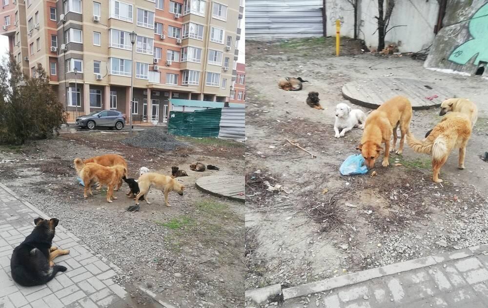 Хоть убейте, но заберите! бездомные собаки не дают пройти: кто виноват?