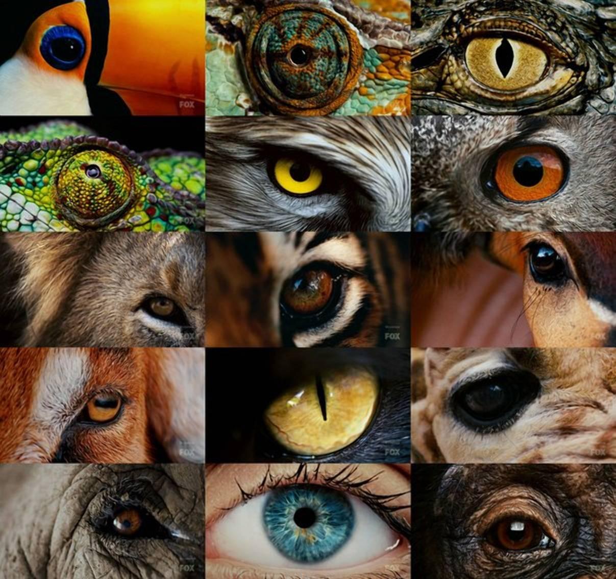Различает ли собака цвета и насколько хорошо видит в темноте