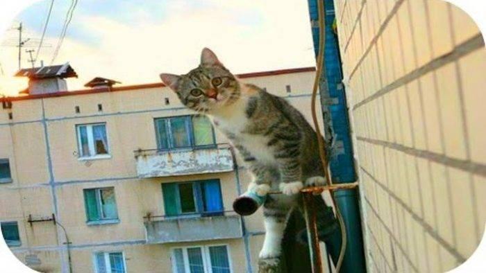 Кот упал с 5 этажа перелом