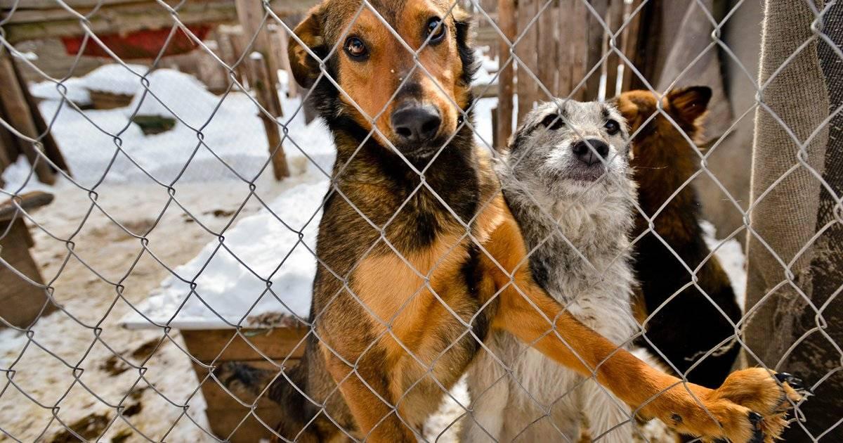 Отдать собаку в приют навсегда: куда пристроить